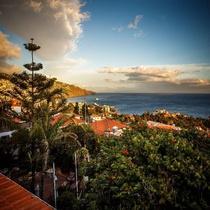 The Flame Tree Madeira