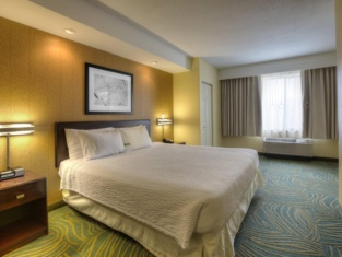 SpringHill Suites by Marriott - Tampa Brandon