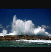 Palmeras del Mar