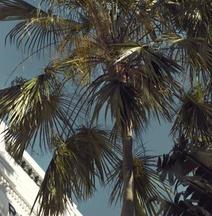 新加坡莱佛士酒店