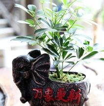 Dong Nan Xi Bei Inn