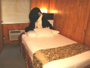The Orca Inn
