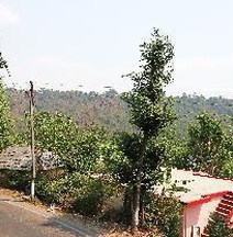Peaceful Hill-View Home In Dharamshala