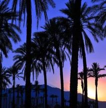 棕櫚泉品質旅館