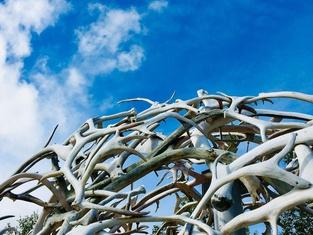 Wild Caribou Dome
