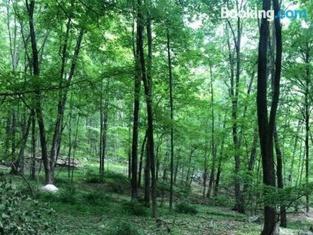 Tentrr - Lopardo Woods