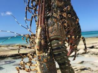 Chocas mar